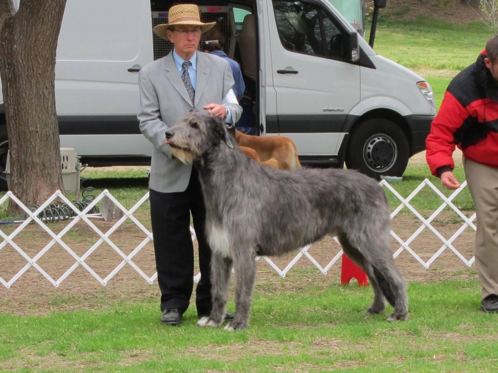 Dog Shows At Bates Nut Farm
