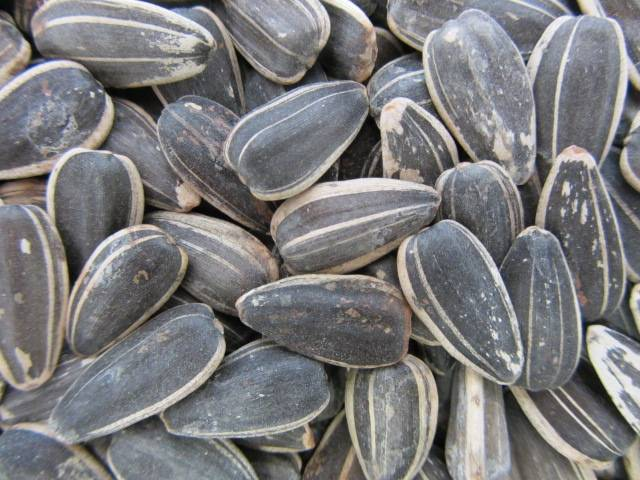 Sunflower Seeds, Roasted & Salted, In Shell 6 oz.