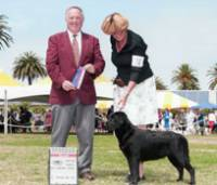Dog Show: San Diego Labrador Retriever Club