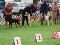 Dog Show:  Cabrillo Kennel Club