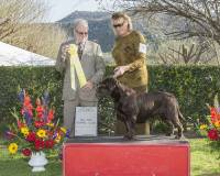 Dog Show: Del Sur Kennel Club