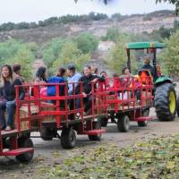 Summer Field Trip at Bates Nut Farm! - Has Been Cancelled