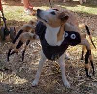 Howl-o-Ween Doggie Costume Contest & Parade