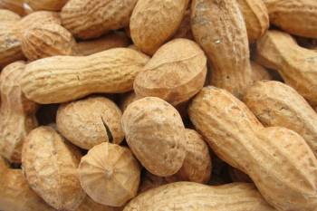 Peanuts, Roasted In Shell, NO SALT, 2 lbs.