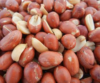 Spanish Peanuts, Roasted NO Salt 16 oz.