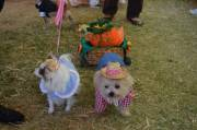 Howl-o-ween Doggie Costume Contest Cover